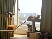 2021貓咪嘗鮮《MOMOCAT》:Peggy Wen01.jpg