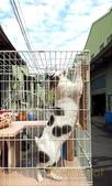 2013~2014貓咪嘗鮮《MOMOCAT》:D01-40c_錢錢_01.jpg