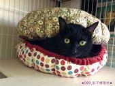 2013~2014貓咪嘗鮮《MOMOCAT》:D09_彭子憶提供_02.jpg