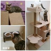 2015~2016貓咪嘗鮮《MOMOCAT》:56_賴韋潔.jpg