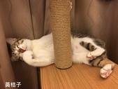 2015~2016貓咪嘗鮮《MOMOCAT》:78_黃桔子.jpg