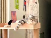 2021貓咪嘗鮮《MOMOCAT》:Emma Wan11.jpg