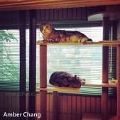 2015~2016貓咪嘗鮮《MOMOCAT》:31_Amber Chang_3.jpg