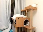 2021貓咪嘗鮮《MOMOCAT》:Cat Yang.jpg