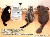2013~2014貓咪嘗鮮《MOMOCAT》:Nancy Lin.jpg