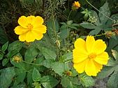 田尾公路花園的繽紛花朵:2011-04-12 13-27-41.JPG