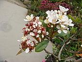 田尾公路花園的繽紛花朵:2011-04-11 13-18-16.JPG