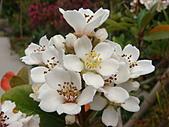 田尾公路花園的繽紛花朵:2011-04-11 13-18-24.JPG