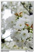 2009北九州櫻花、溫泉還有拉麵之旅Day2_熊本登城:DSC_5017.jpg
