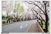 2009北九州櫻花、溫泉還有拉麵之旅Day2_熊本登城:DSC_5026.jpg