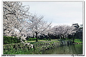 2009北九州櫻花、溫泉還有拉麵之旅Day1_初訪博多:DSC_4724.jpg