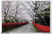 2009北九州櫻花、溫泉還有拉麵之旅Day2_熊本登城:DSC_5030.jpg