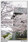 2009北九州櫻花、溫泉還有拉麵之旅Day2_熊本登城:DSC_5034.jpg