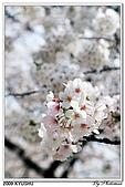 2009北九州櫻花、溫泉還有拉麵之旅Day1_初訪博多:DSC_4732.jpg