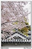 2009北九州櫻花、溫泉還有拉麵之旅Day2_熊本登城:DSC_5044.jpg