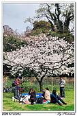 2009北九州櫻花、溫泉還有拉麵之旅Day1_初訪博多:DSC_4746.jpg