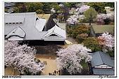 2009北九州櫻花、溫泉還有拉麵之旅Day2_熊本登城:DSC_5081.jpg