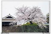 2009北九州櫻花、溫泉還有拉麵之旅Day2_熊本登城:DSC_5108.jpg