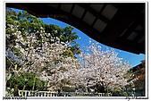 2009北九州櫻花、溫泉還有拉麵之旅Day2_熊本登城:DSC_5224.jpg