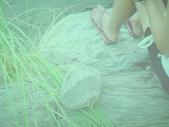 2012.05.09系週會:IMG_0338.JPG