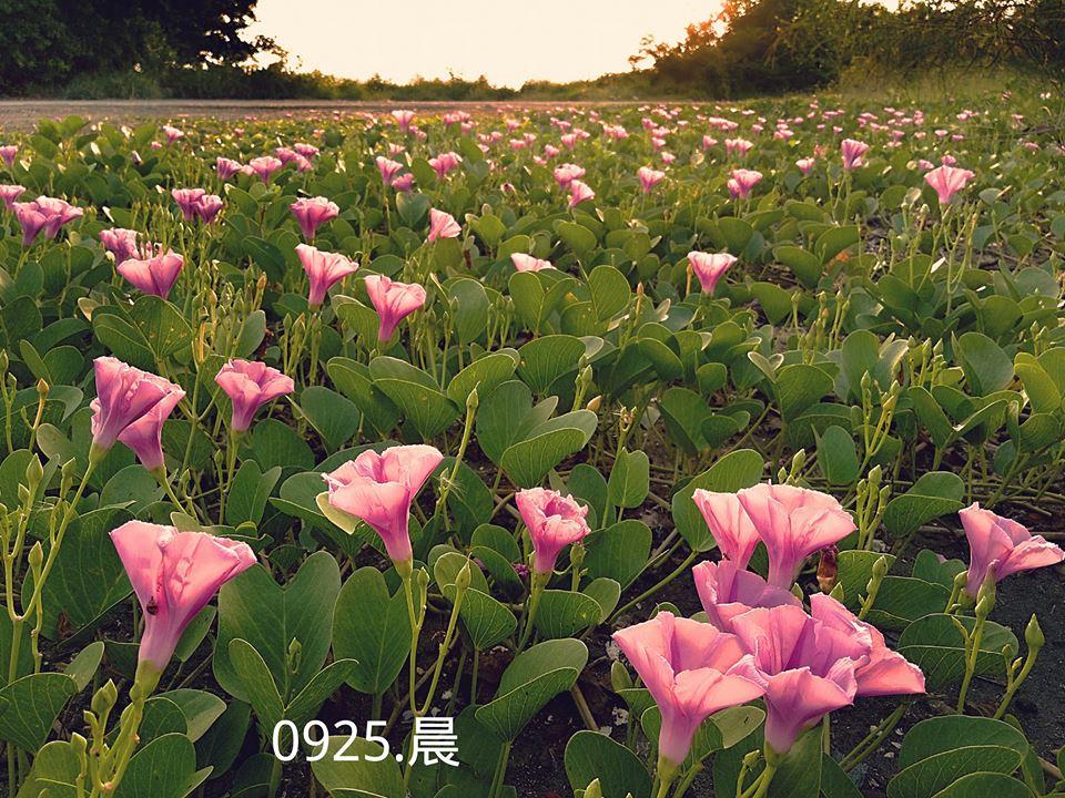 東港風情-12.jpg - 東港風情-20