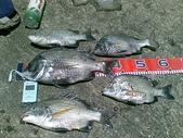 釣魚:7/11/2008 北堤