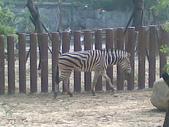 萬壽山動物園:ABCD0011