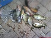 :將軍港漁獲01262009