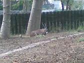 萬壽山動物園:ABCD0014