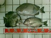 釣魚:ABCD0016.JPG