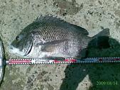 釣魚:08142009安平南堤