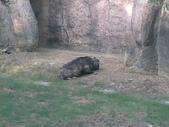 萬壽山動物園:ABCD0015