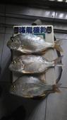 釣魚:6月1日安平南堤