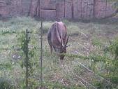 萬壽山動物園:ABCD0009