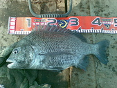 釣魚:金湖黑鯛02212009