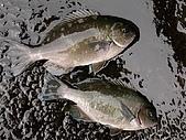 釣魚:p49