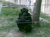 萬壽山動物園:ABCD0007