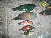 海龍磯釣集錦:p111742379632