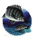 釣魚:p63