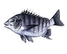 釣魚:p64