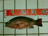 釣魚:ABCD0019.JPG