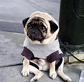 CG圖庫:可憐的狗狗..一臉無辜的表情02.jpg