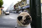 CG圖庫:可憐的狗狗..一臉無辜的表情03.jpg