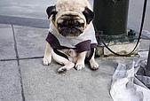 CG圖庫:可憐的狗狗..一臉無辜的表情04.jpg