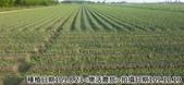 2019-2020農作物:P1040912-2.jpg
