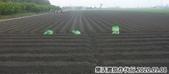 2019-2020農作物:P1040905-5.jpg