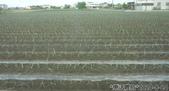 2019-2020農作物:P1040896-2.jpg