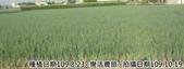2019-2020農作物:P1040921-2.jpg