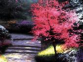 與大自然同住:溫馨田園風景油畫11-1.jpg