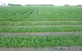 2019-2020農作物:P1040897-2.jpg